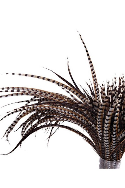 Large Pheasant Feather